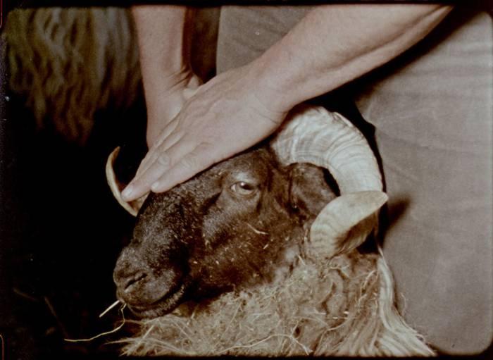 Maddi Barberrek 'Gorria' filma estreinatuko du gaur Ikuspuntu jaialdian